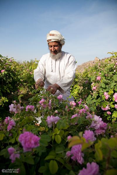 Roses Water (79)-Aljabal Alakhdhar-Oman.jpg