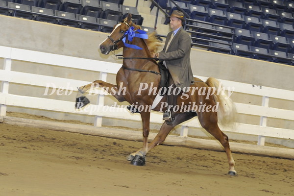 CLASS 13 - 4 YR OLD OPEN SPEC