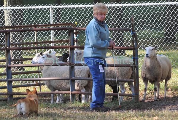 Course A Sheep - Sunday