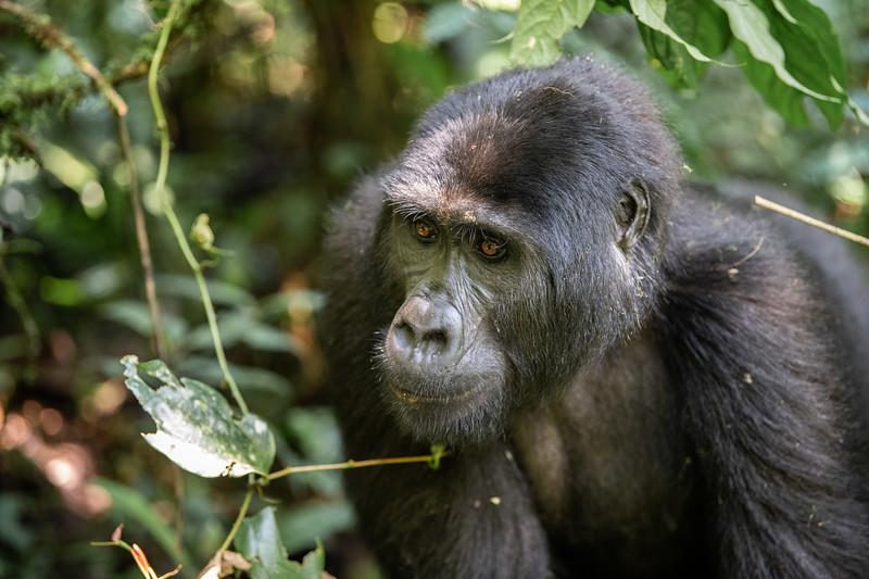 Uganda_T_Gor-387.jpg