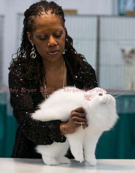 CatShow2014063_1.jpg
