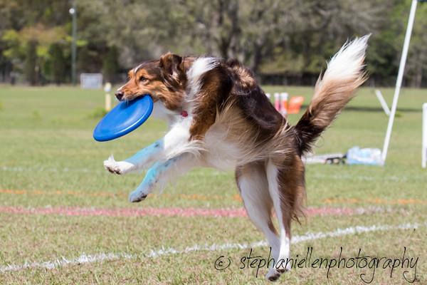 _MG_2951Up_dog_International_2016_StephaniellenPhotography.jpg