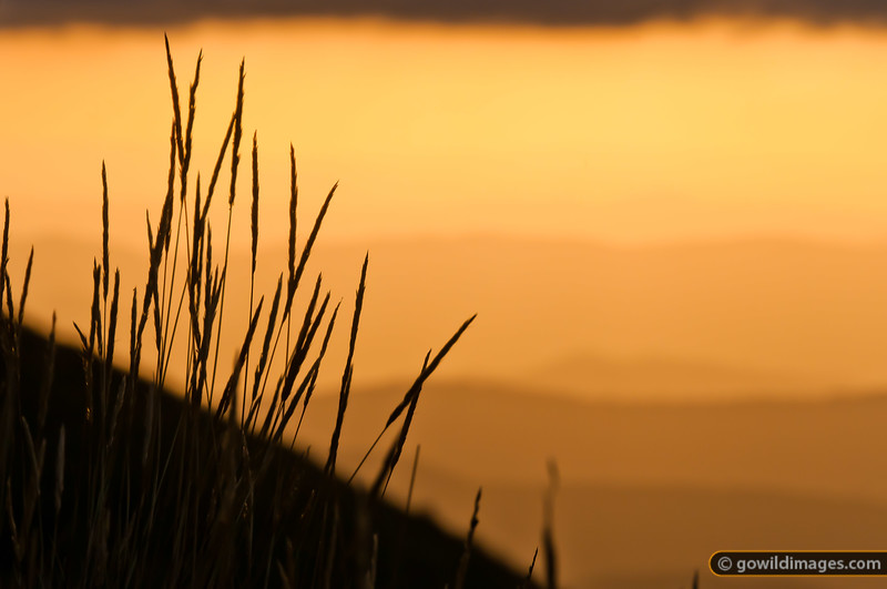 Native grasses at sunset from Mt Feathertop