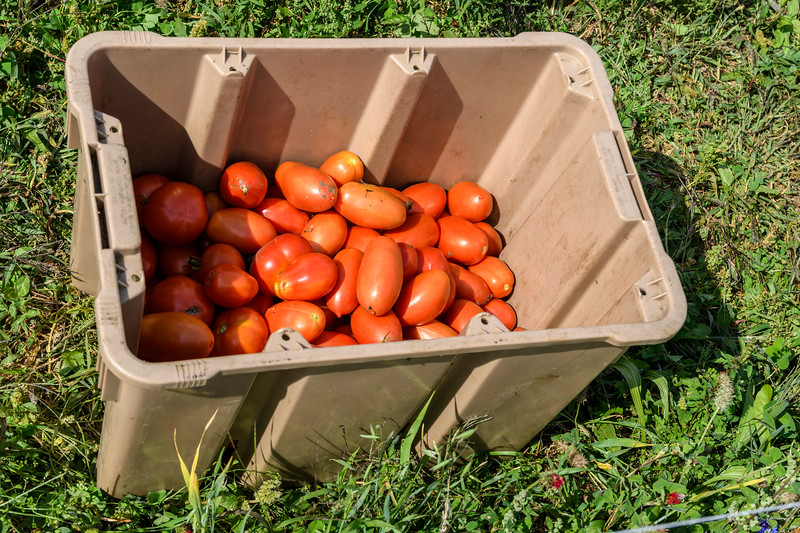seeds weeds and tomatoes-38.jpg