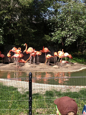 Columbus Zoo May 2013