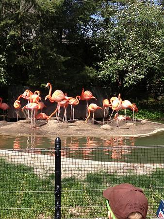 Columbus Zoo May 2013