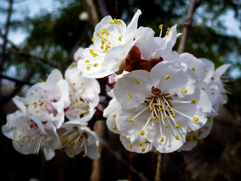 spring flowers-1000754.jpg