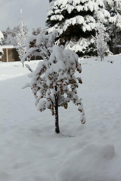 Snowy_Morning_11_10_2012_3308.JPG