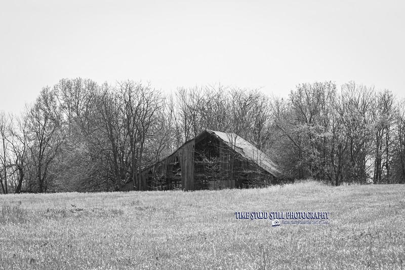 KC Landscape-50.jpg