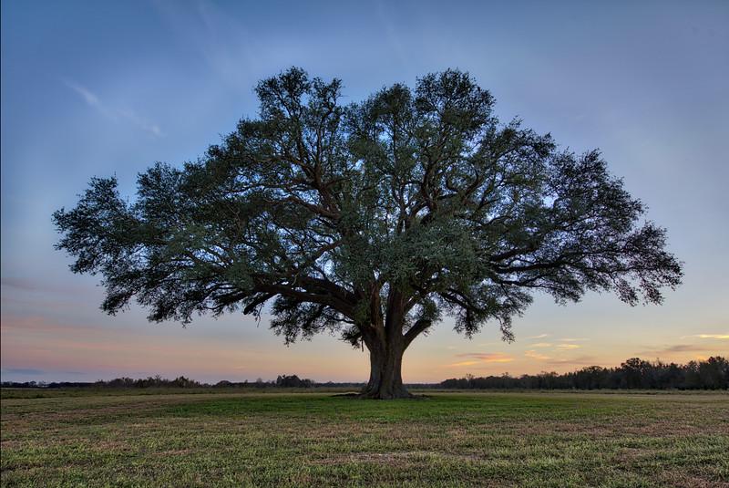Spooner Oak.jpg