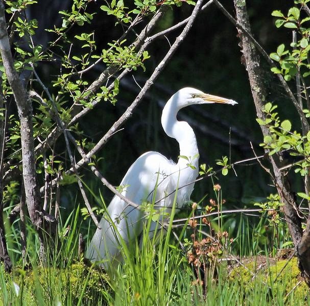 white egret_edited-1.jpg