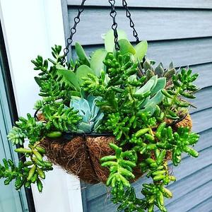 Succulent Misc Photos