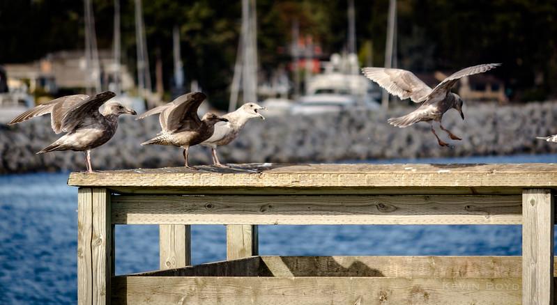 a twitter of seagulls.jpg