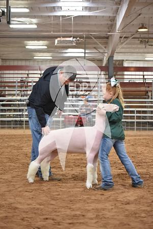 Sheep Ring Shots