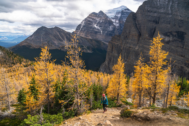 Mount Fairview Lake Louise Larches September 2020