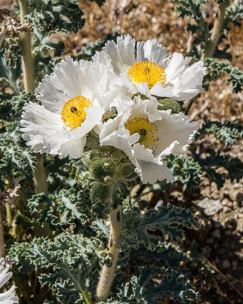Flower29.jpg