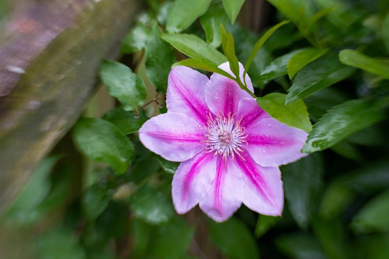 Flowers 04 26-86.jpg