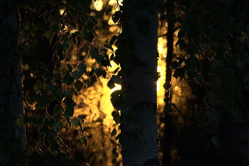 Boreal Glow