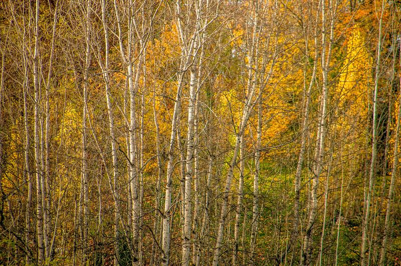 Fall_236.jpg