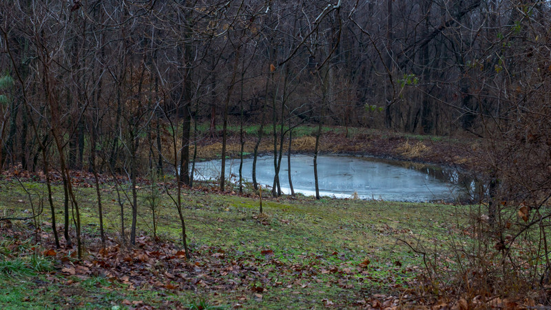 """pond project: dreary day in """"normal"""" light."""