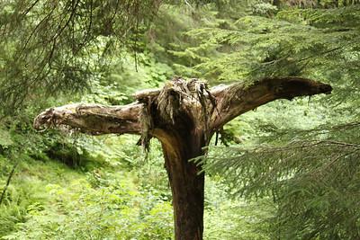 Juneau-Rainforest