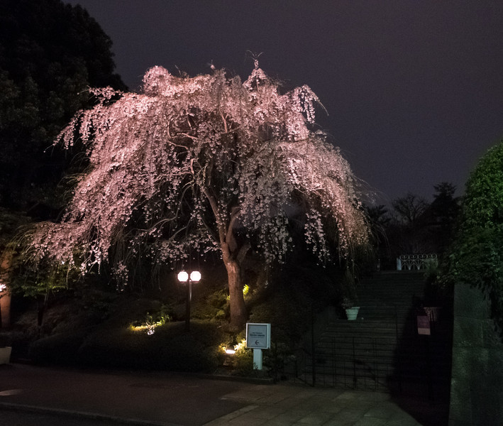 Tokyo Day 1 (40 of 40).jpg