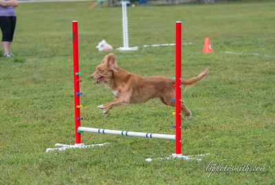 Up Dog 3/16 2