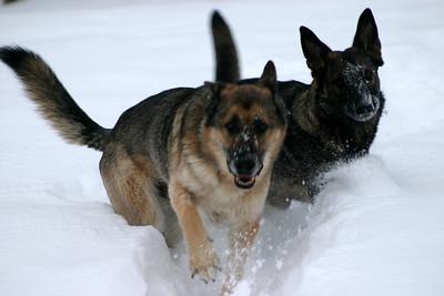 2008.12.23 Ari and Brita - Snow Dogs