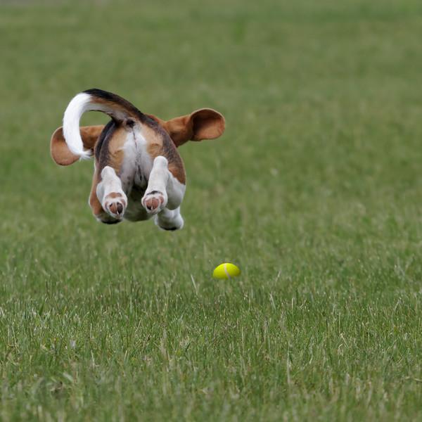 Big Brody Leap