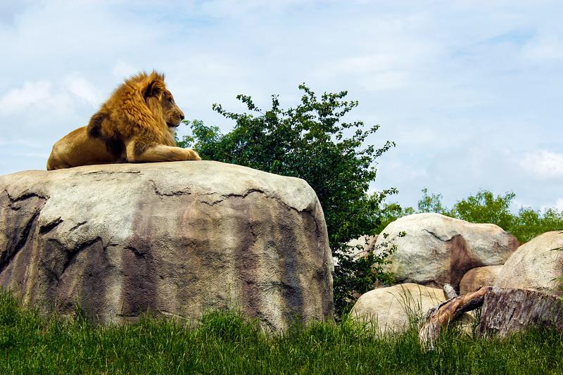 130525, Zoo (8) LPF.jpg