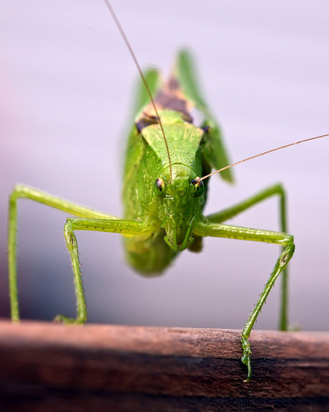 Hopper-1.jpg