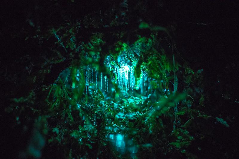 glowworm best 2-1.jpg