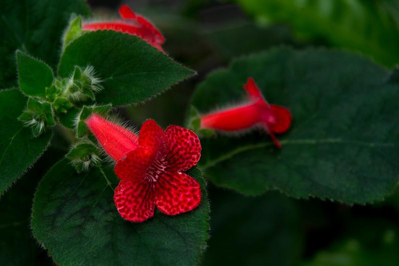 015-flower-dsm-03feb17-18x12-003-7512