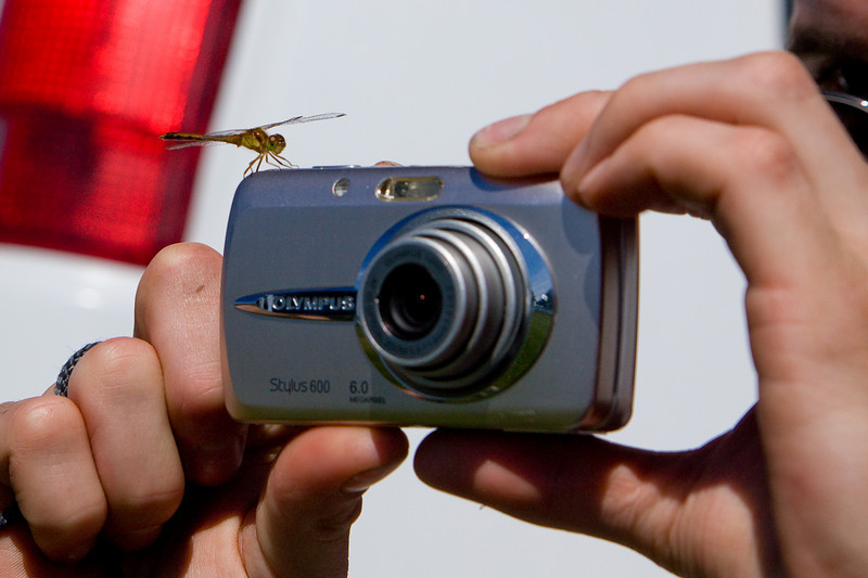 This dragonfly landed right on Lou's camera while he was taking pictures