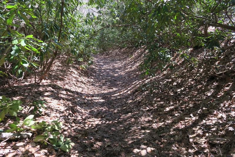 Devils Elbow Trail - 3,680'