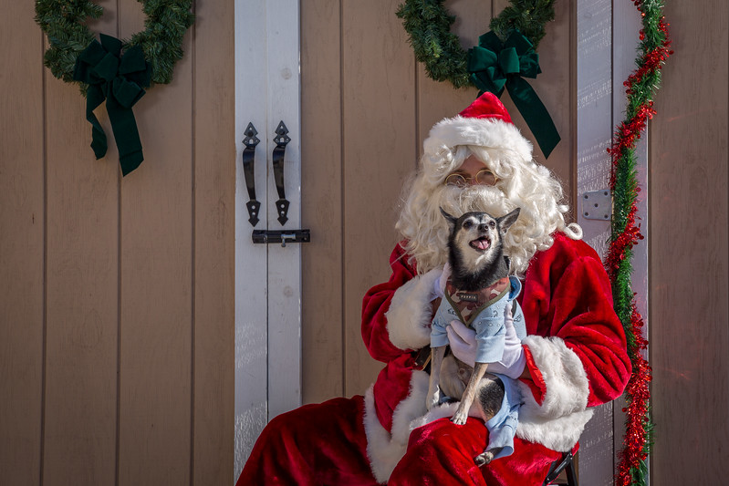 Pet Pictures With Santa-97.jpg