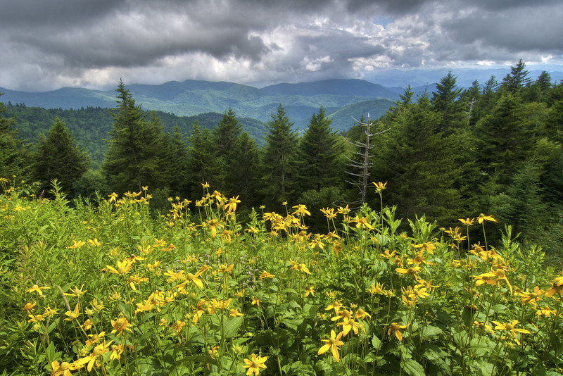 Blooming wildflowers at a scenic overlook on the Blue Ridge Parkway in North Carolina on Friday, July 24, 2015. Copyright 2015 Jason Barnette