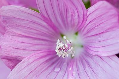 _DSC4473_pink_flower