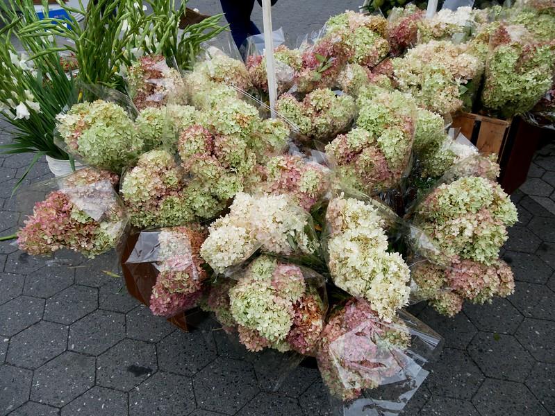 Hydrangea at the Union Square Greenmarket