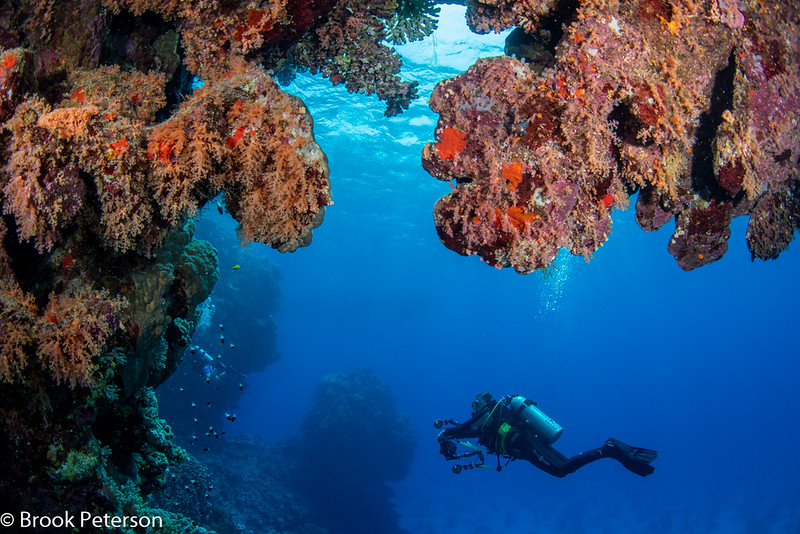 Diver on a reef