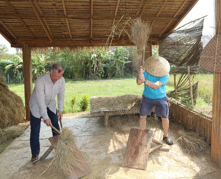 We then learned how to thrash the rice to remove the grains from the stalks.