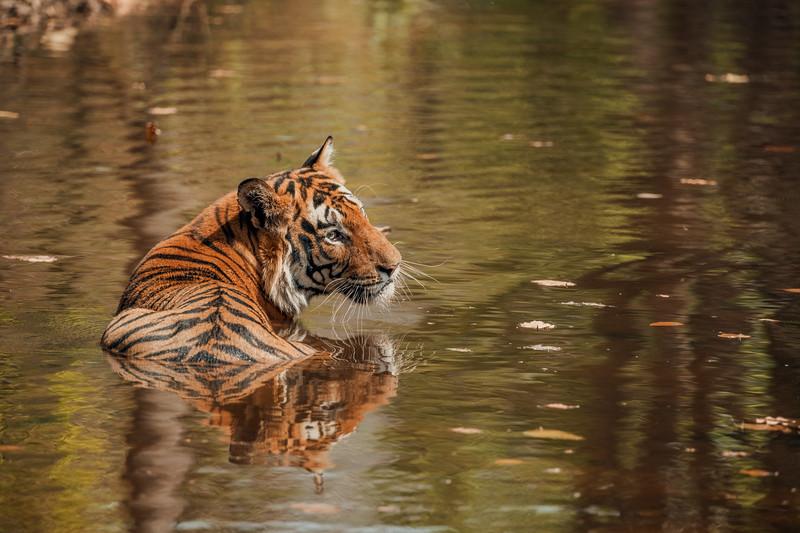 India_April_2019-988.jpg