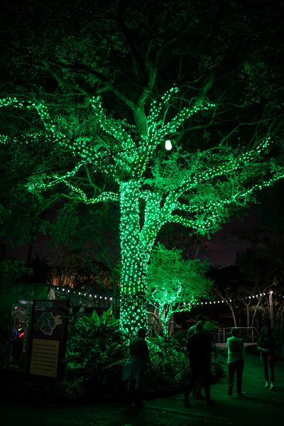 ZooTampa_Christmas-147.jpg