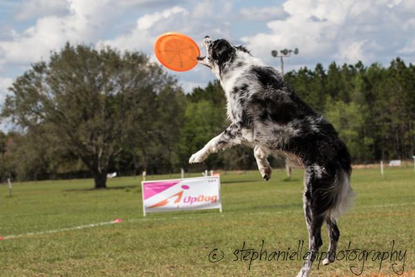 _MG_3216Up_dog_International_2016_StephaniellenPhotography.jpg