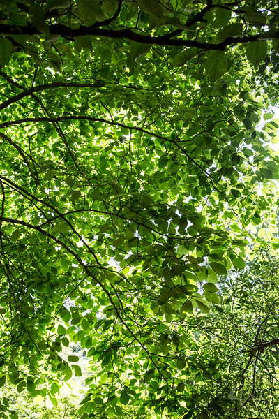 PlantDelightsSpring2013-2728.jpg