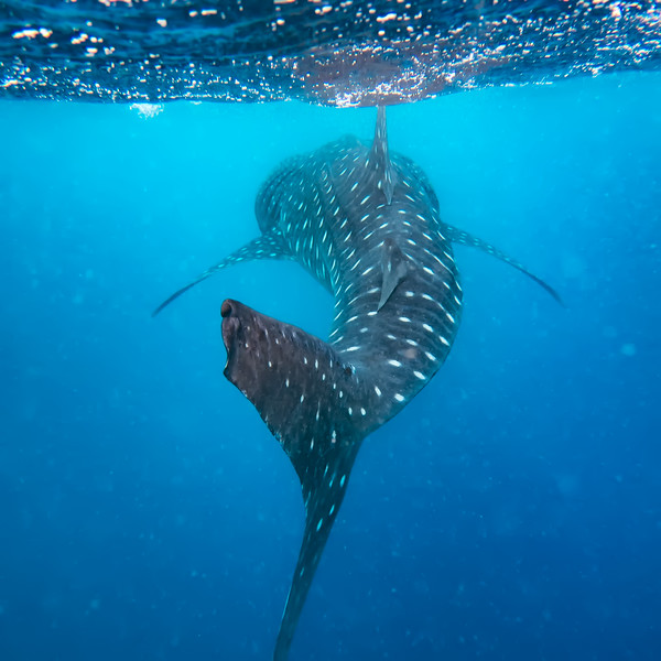 2017 - Maldives