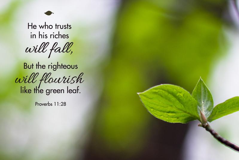 20_Proverbs11-28_NJ_2015-5-17.jpg