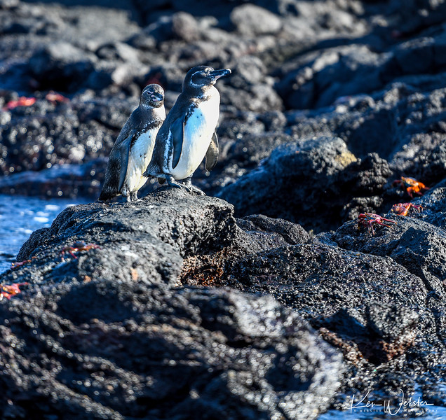 2018 Sombrero Island-5.jpg