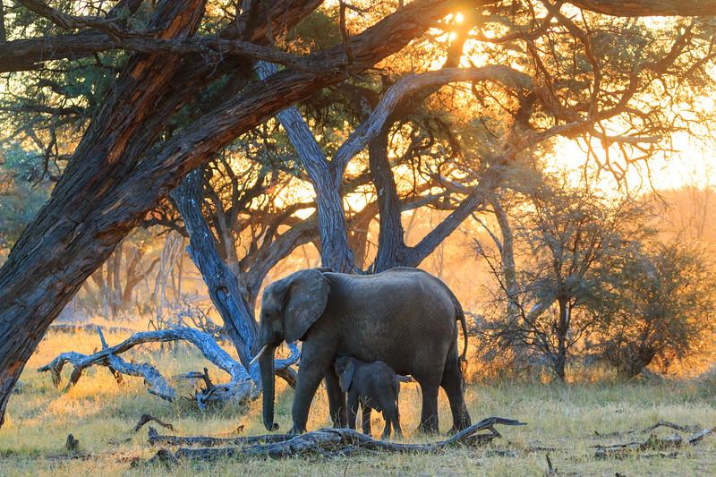 Safari 17 Highlights