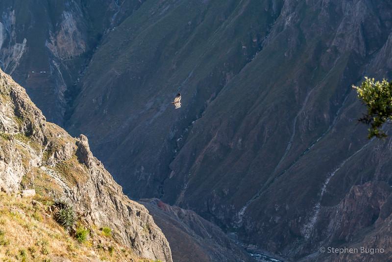 Colca Canyon-1204.jpg